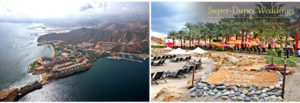 muscat images